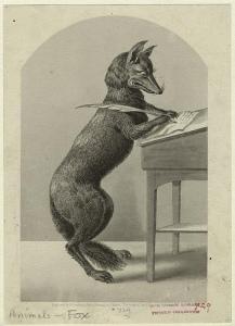 quill fox